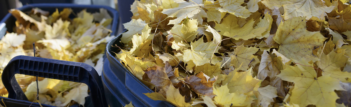 Is it Better to Rake or Mulch Your Leaves? Image