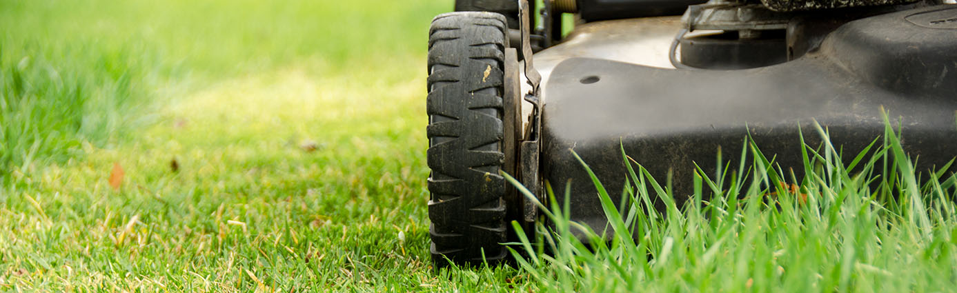 When to Stop Mowing Your Lawn Before Winter Image