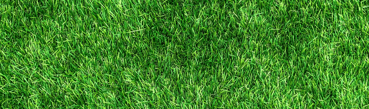 Tips for a Healthy Green Lawn Image