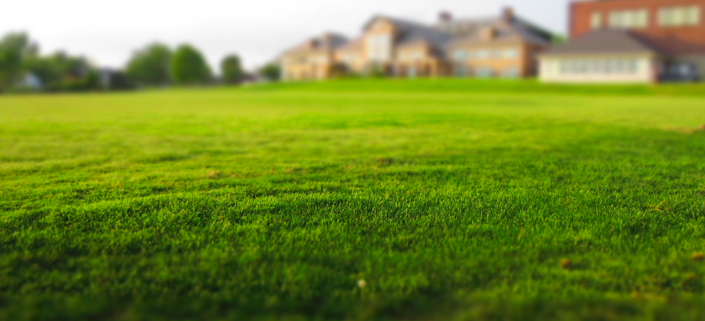 Benefits of Spring Aeration | TruGreen Image