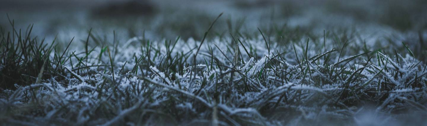 Winterizing Your Lawn: Tips to Protect Your Yard This Winter Image