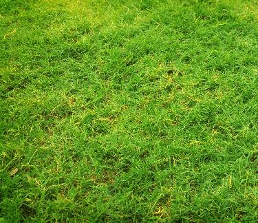 Lawn Fungus Does My Lawn Have A Lawn Fungus Trugreen
