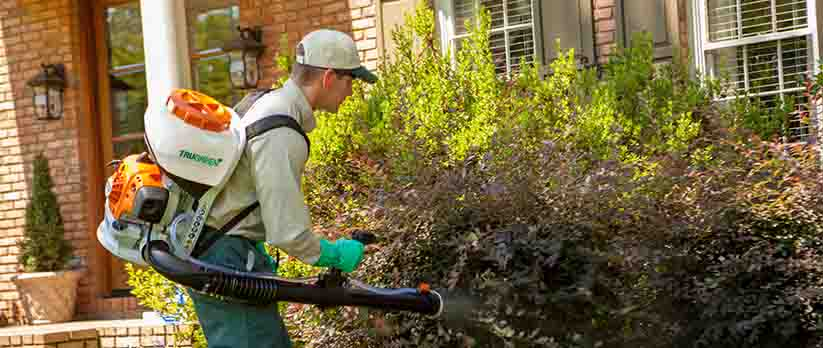 TruGreen Specialist with Blower Spraying Bushes to Kill Mosquitoes