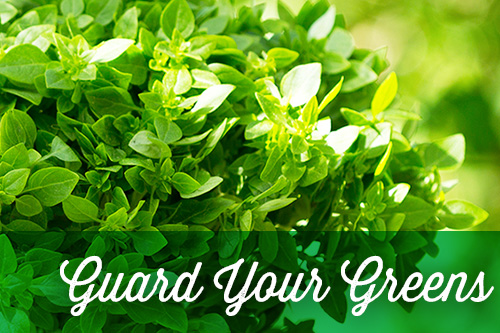 <p>green plant &quot;guard your greens&quot;</p>