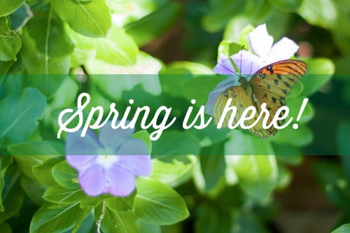 <p>bring your yard back to life after winter</p>