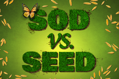 <p>Should I Use Seed or Sod for Fall Grass?</p>