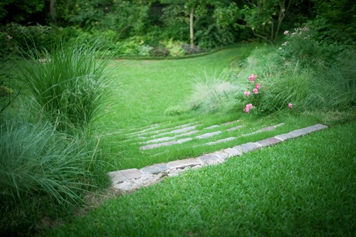 <p>Weed Control for Lawns</p>