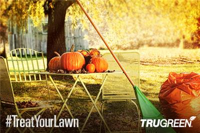 <p>services to help treat your lawn</p>