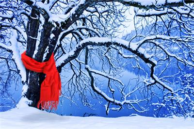 <p>5 Things That Are Threatening Your Trees This Winter</p>