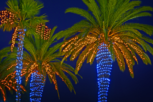 <p>Palm trees during Christmas</p>