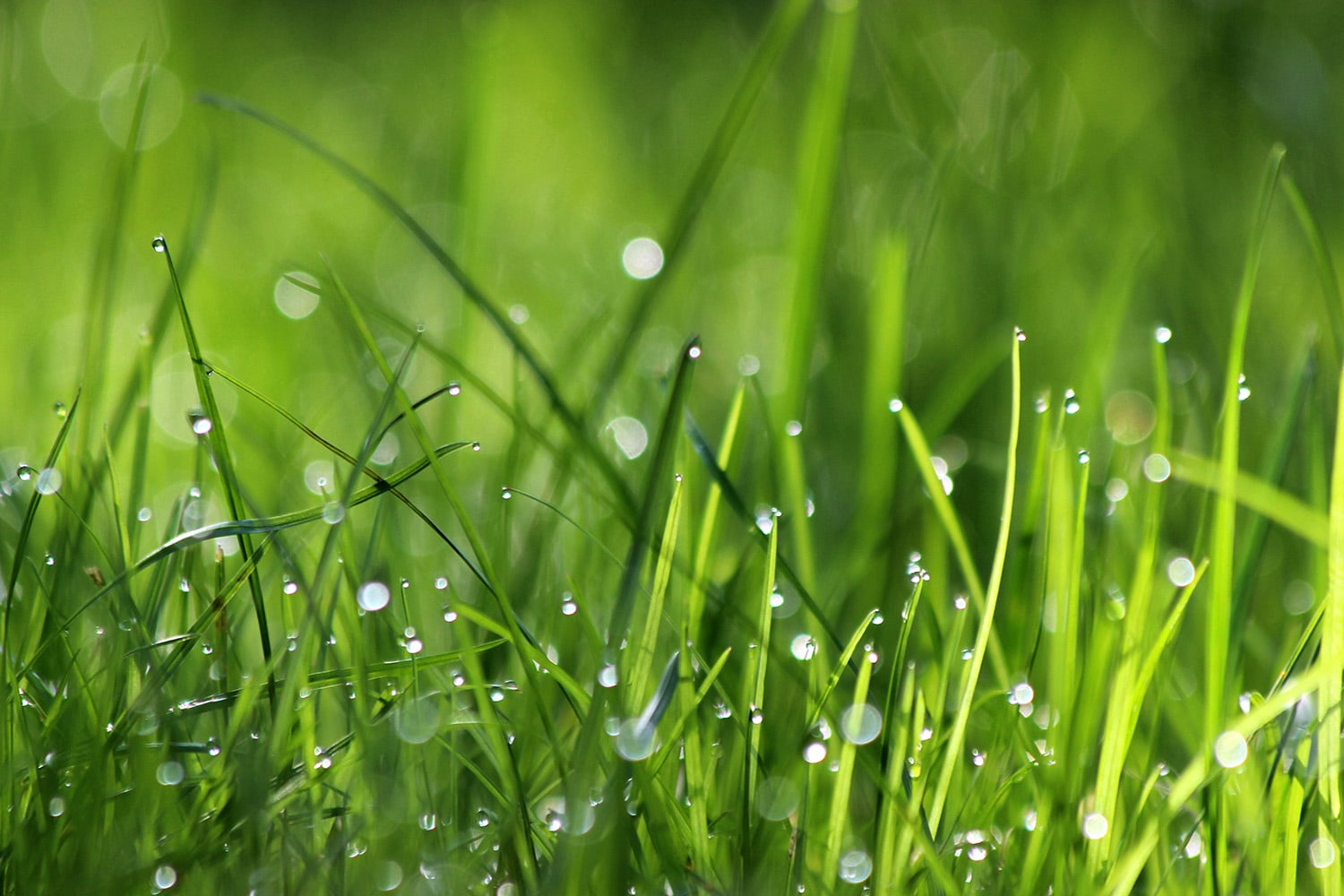<p>Blades of grass with drops of water</p>