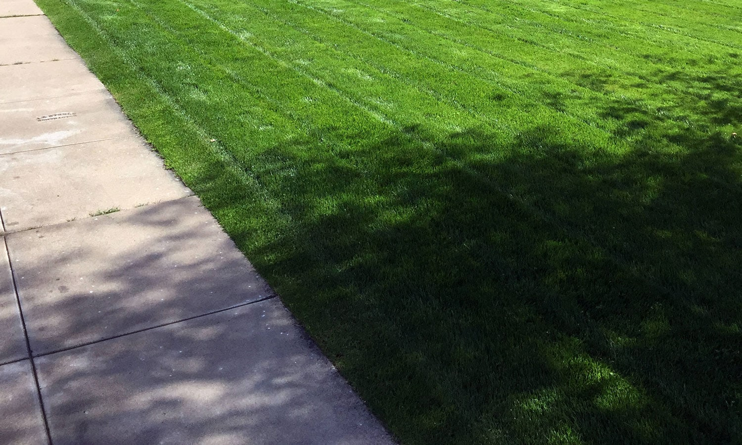 <p>freshly mowed lawn with a sidewalk on the left</p>