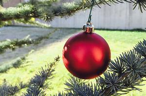 <p>Arbor Day Decoration Tips</p>