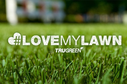 <p>Love My Lawn contest</p>