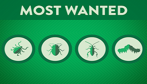 Four pests that pose a threat to your yard