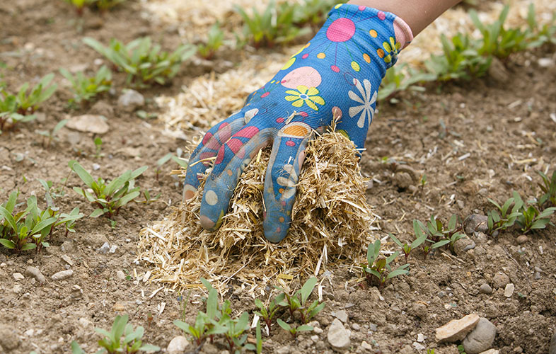 Hand spreading mulch in garden