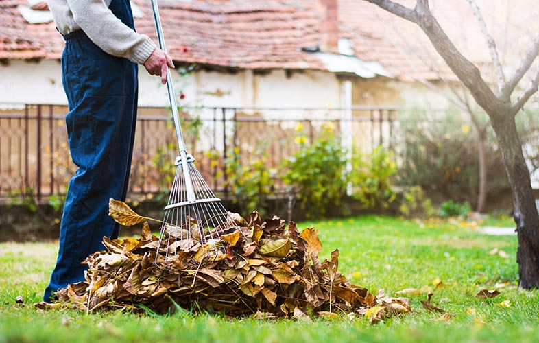 Person raking leaves on lawn