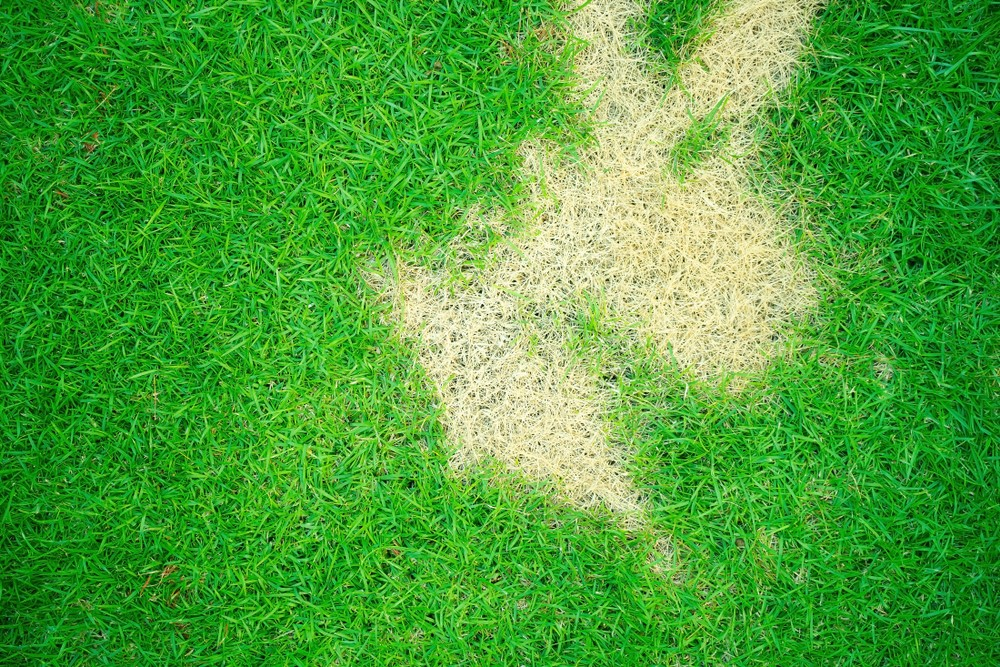 Fungus Control Guide For Lawns Trugreen