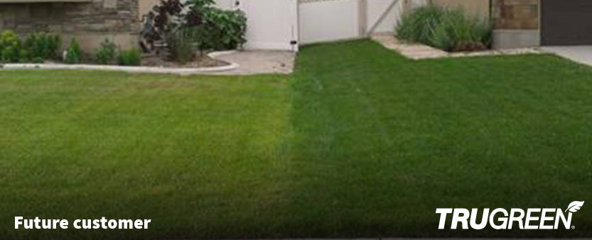 Affordable Lawn Care Maintenance Treatment Services Trugreen